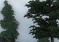 oblivion_4xMS