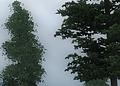 oblivion_4xTMSAA+CS