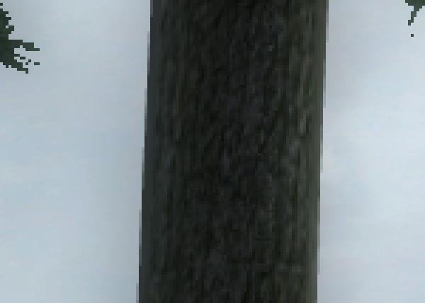 oblivion_4xAA_CF