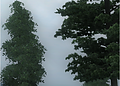 oblivion_4xEATM+CF