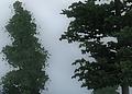 oblivion_4xTSSAA+CS