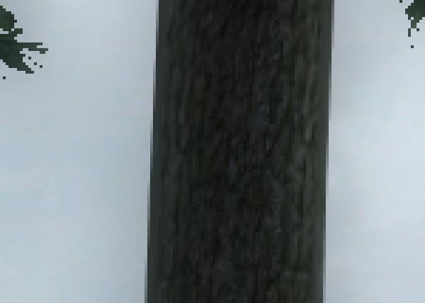 oblivion_8xAA_CF